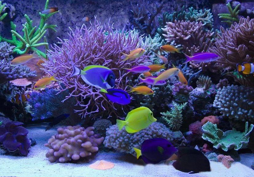 Led light blog led light armband for Saltwater fish tank lights